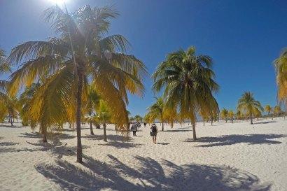 Palmen am Strand von Cayo Largo. Foto: Oliver Heider