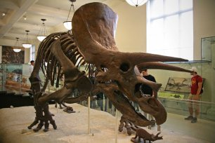 American Museum of Natural History. Foto: Oliver Heider