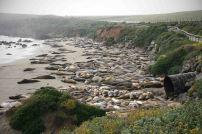 See-Elefanten am Elephant Seal View Point. Foto: Oliver Heider