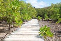 Steg im Inselinneren. Foto: Oliver Heider
