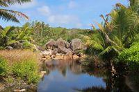 Tropische Vegetation. Foto: Oliver Heider