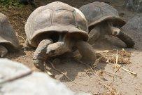 Schildkröten. Foto: Oliver Heider