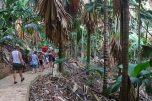 Vallée de Mai. Foto: Oliver Heider
