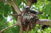 Vogel-Paradies. Foto: Oliver Heider