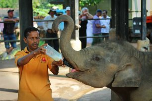 Elefantenwaisenhaus in Pinnawala. Foto: Oliver Heider