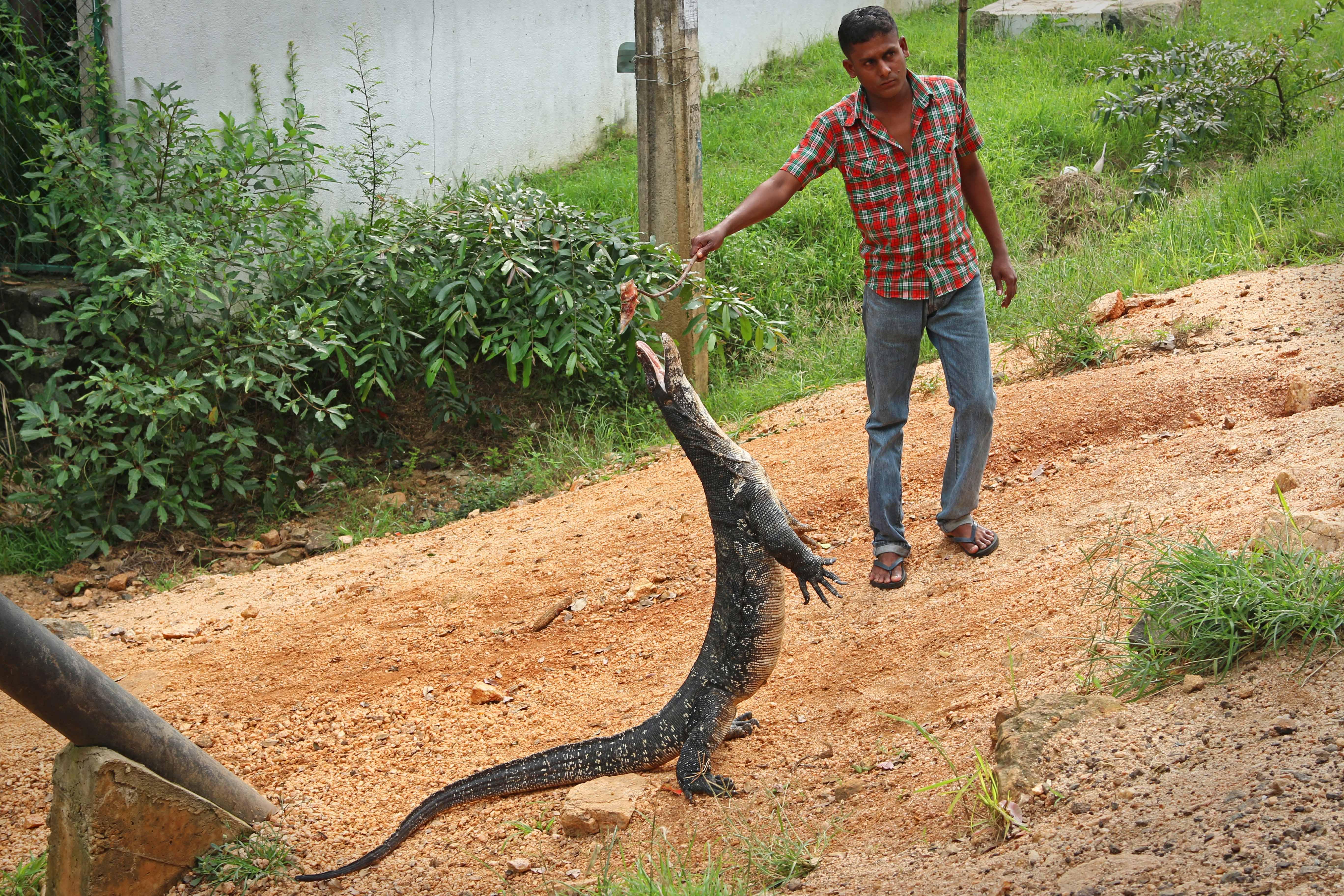 SriLanka_04