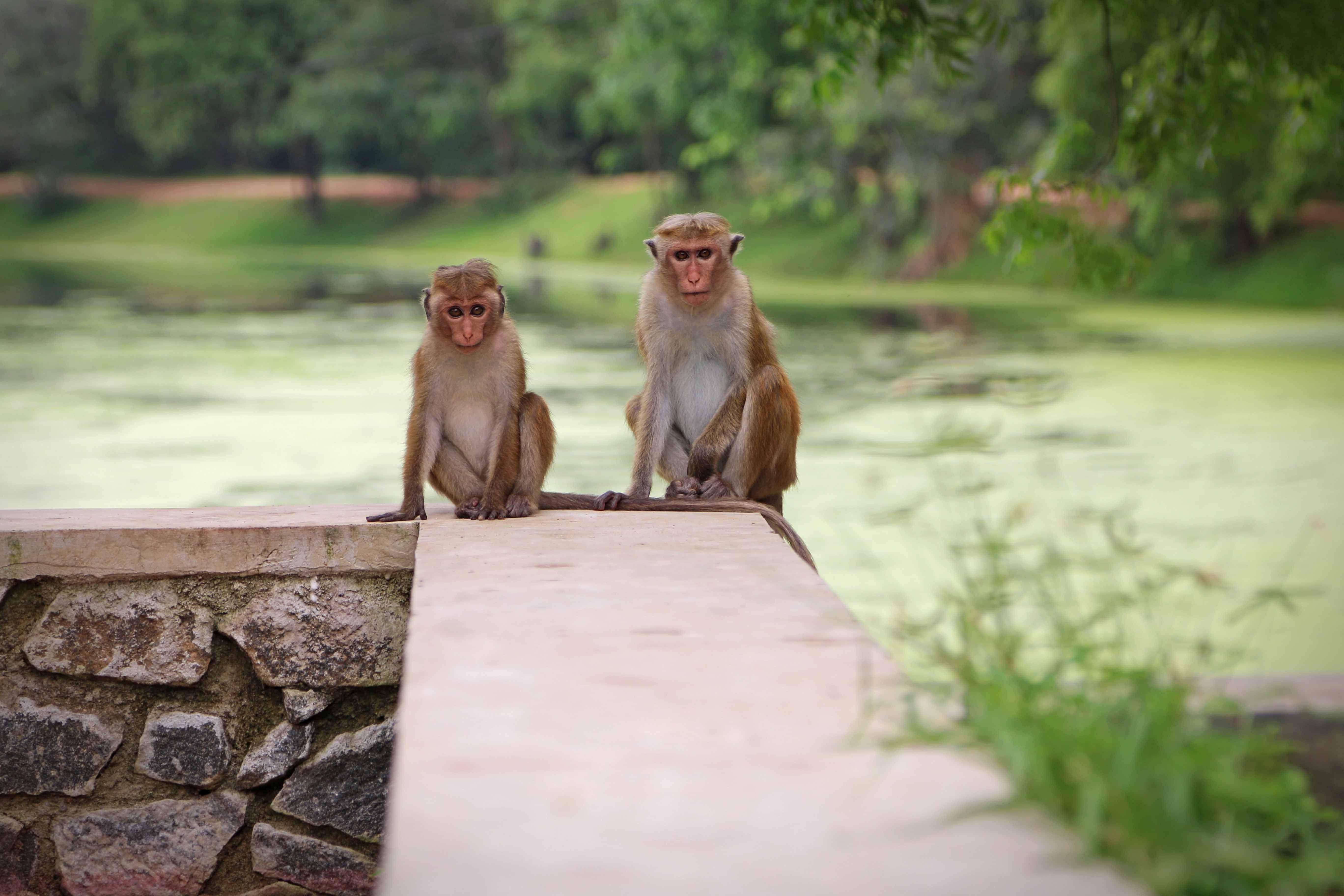 SriLanka_08