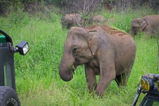 Elefanten im Hurulu Eco Park. Foto: Oliver Heider