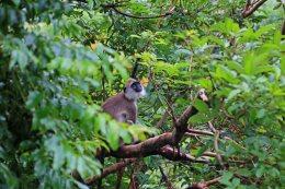 Affe am Löwenfelsen in Sigiriya. Foto: Oliver Heider