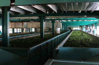 Teefabrik. Foto: Oliver Heider