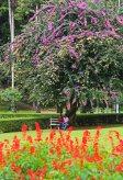 Botanischer Garten. Foto: Oliver Heider