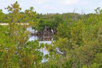 Naturschutzgebiet auf Cayman Brac. Foto: Oliver Heider