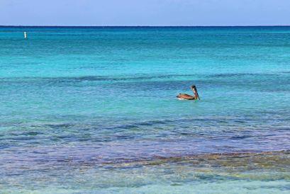 Die Farbe des Wassers am Seven Mile Beach ist der Wahnsinn. Foto: Oliver Heider