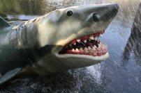 Angriff des weißen Hais. Foto: Oliver Heider