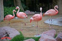 Wildlife Habitat Hotel Resort Casino Flamingo Las Vegas USA