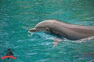 Siegfried Roy's Secret Garden and Dolphin Habitat Las Vegas USA