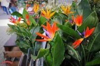 niederlande-amsterdam-bloemenmarkt3