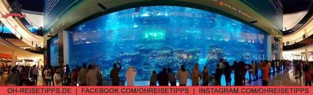 Das Aquarium in der Dubai Mall. Foto: Oliver Heider