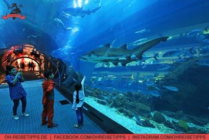 Ein Tunnel unter dem Wasser des Aquariums in der Dubai Mall. Foto: Oliver Heider