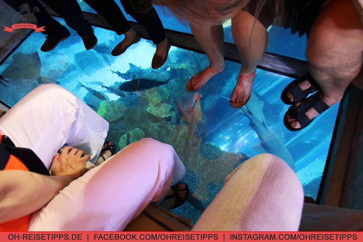 dubai_aquarium_05