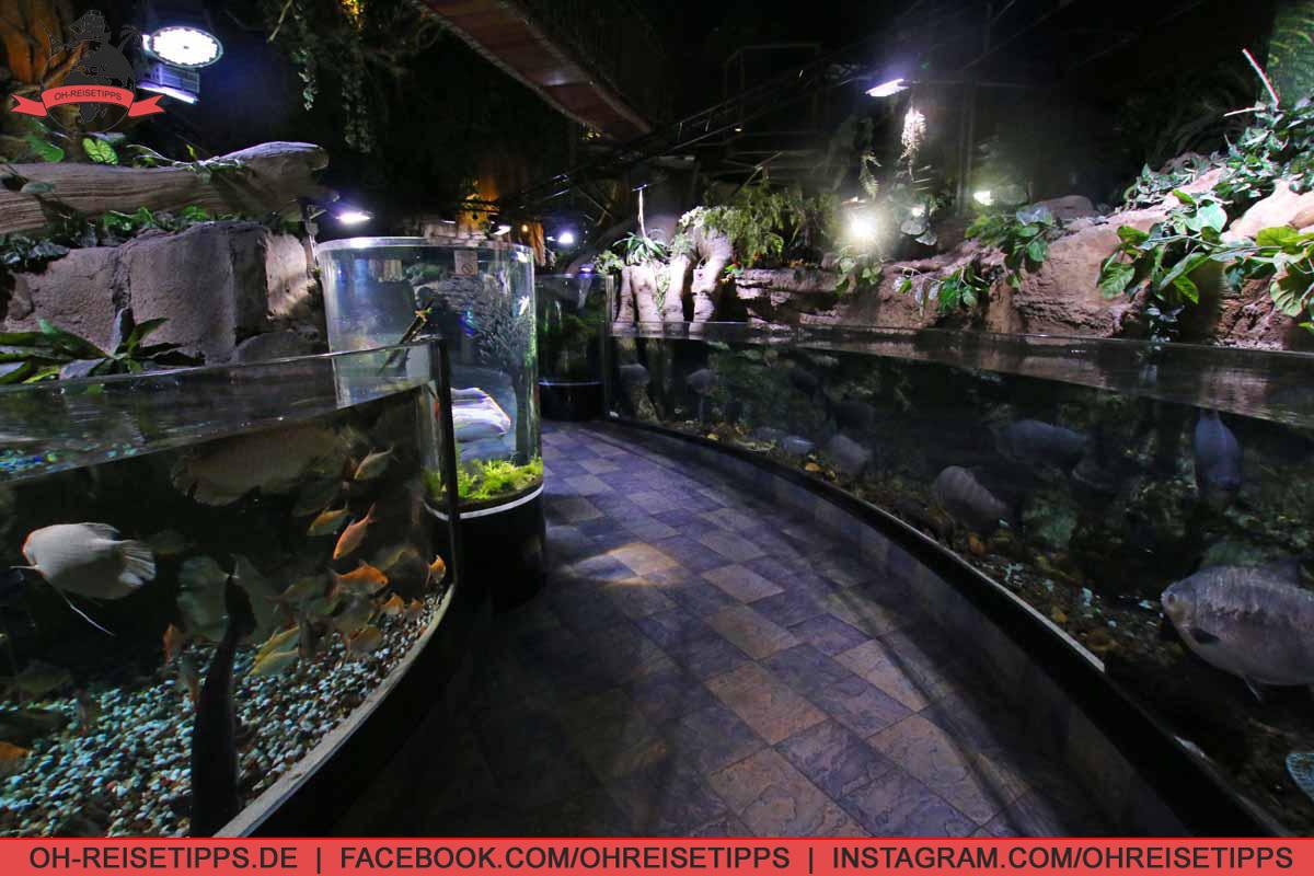 dubai_aquarium_06