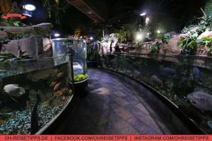 Ein Zoo im Aquarium in der Dubai Mall. Foto: Oliver Heider