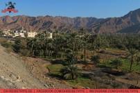 Eine Oase im Gebirge im Emirat Fujairah. Foto: Oliver Heider